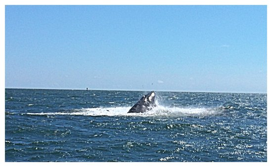 Thundercat Dolphin Watch: Hump back whale sighting