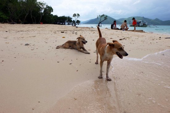 Atwayan Beach: Couple of stray dogs on the beach.