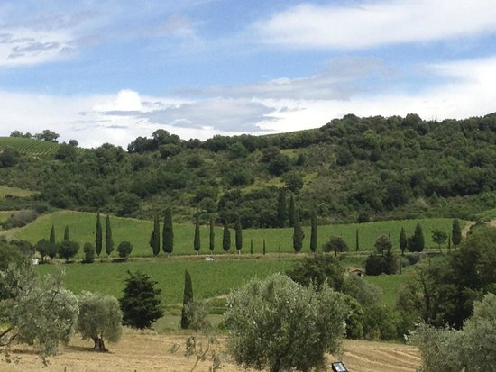 Tuscan Wine School - Siena : View from the grounds of the Abbey.