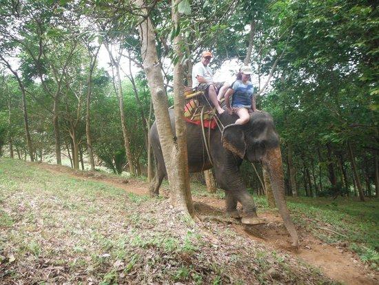KokChang Safari Elephant Trekking: Just call me elephant trainer
