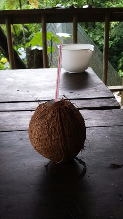 Roots Jungle Retreat: Fresh coconut prepared by charly