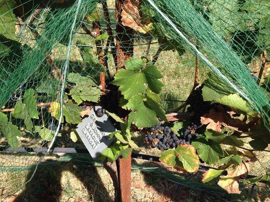 Gracianna Winery : Gracianna groupies!