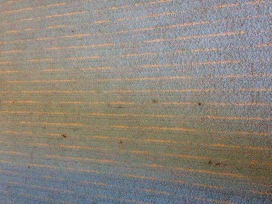 Outer Banks Inn : rm 210 carpet
