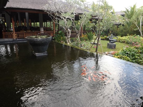 Padma Resort Legian: Surround ponds with carps