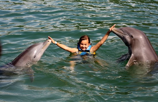 Dolphin Discovery Puerto Aventuras: Dolphin greeting