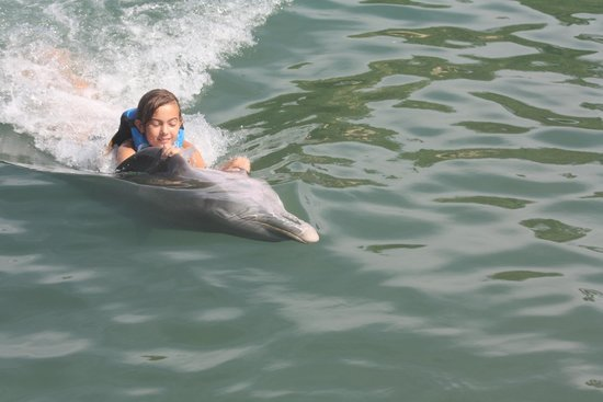 Dolphin Discovery Puerto Aventuras: upside-down dolphin swim