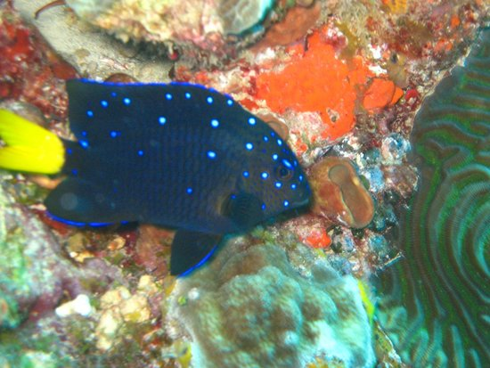 Wet Set Diving Adventures: My new favourite....the disco fish :)