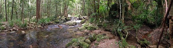Sweetwater Lodge: Stream on rainforest walk to watersource