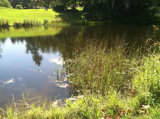 Golden Eagle Resort : Fishing pond located centrally on the property