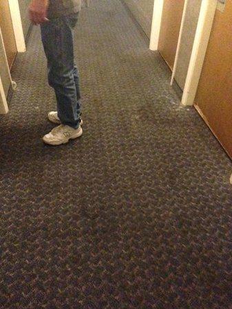 Rodeway Inn: nasty carpet
