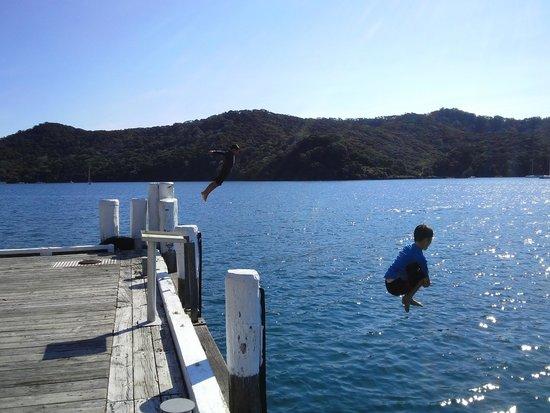 Great Barrier Lodge: Enjoy a dive off Whangaparapara Wharf