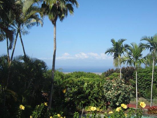 Hawaiian Oasis B&B: view from the aloha room