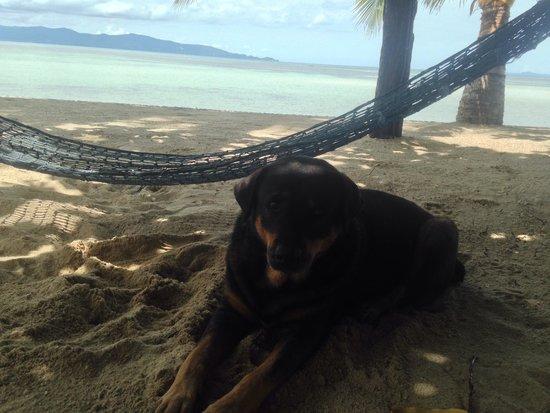 Dewshore Resort : The lovely dog��