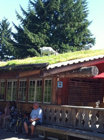 Hawley Place Bed and Breakfast : Goat's On the Roof at COOMBS!