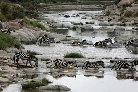 Rekero Camp, Asilia Africa: Double Zebra Crossing