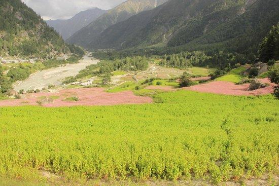 Banjara Camp &  Retreat - Sangla Valley Camp: View of Valley