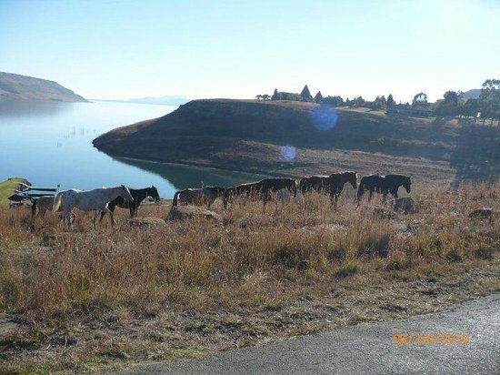 Qwantani Berg and Bush Resort: The horses