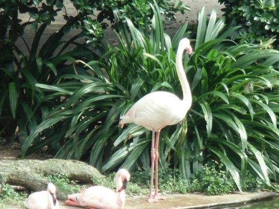 Kowloon Park: フラミンゴ