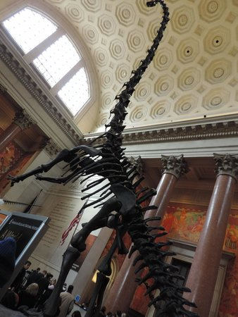 American Museum of Natural History : Entrada do Museu