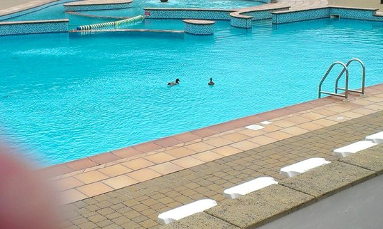 Hendra Holiday Park: on site outside pool even on a dull day the ducks can enjoy it