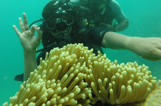 Andaman Bubbles: With Anemones