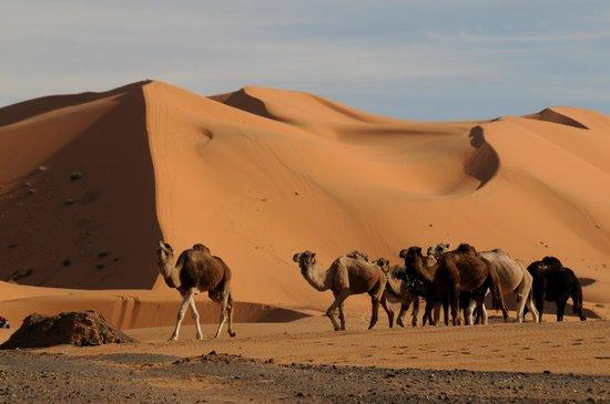 La Gazelle Bleue: Great Dune