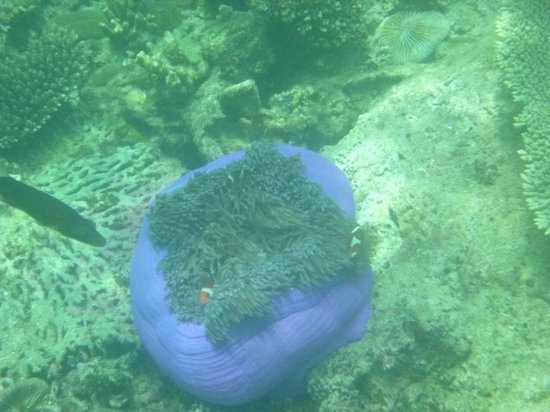 جايا أيلاند ريزورت: Under water