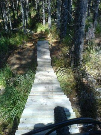 Woodhill Mountain Bike Park: For advanced riders