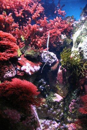Lisbon Oceanarium : Коралловые рифы