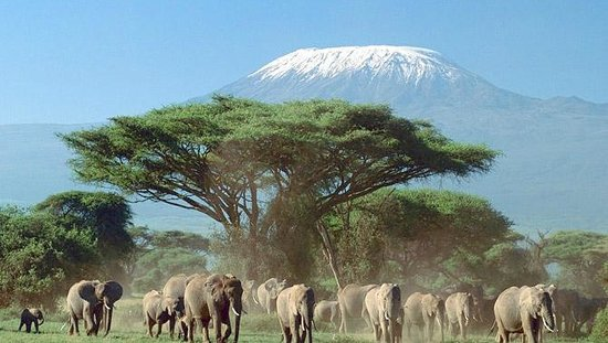 AA Lodge Amboseli: View from the hotel room