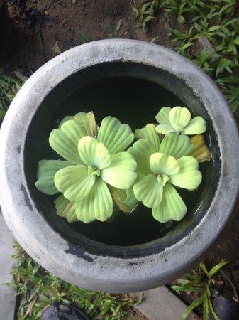 Siem Reap Green Home Guesthouse: green home