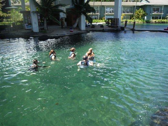 Dolphin Quest : イルカちゃんと泳ぐ