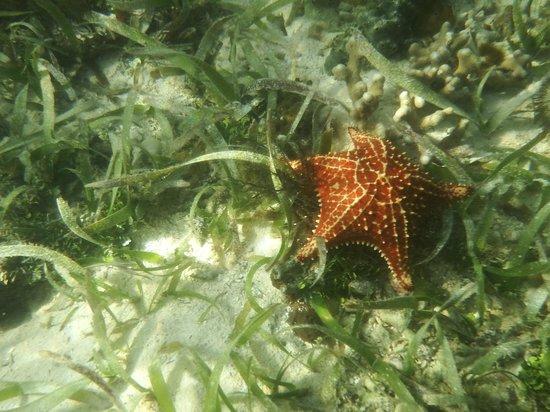 La Loma Jungle Lodge and Chocolate Farm : Sea Star Island