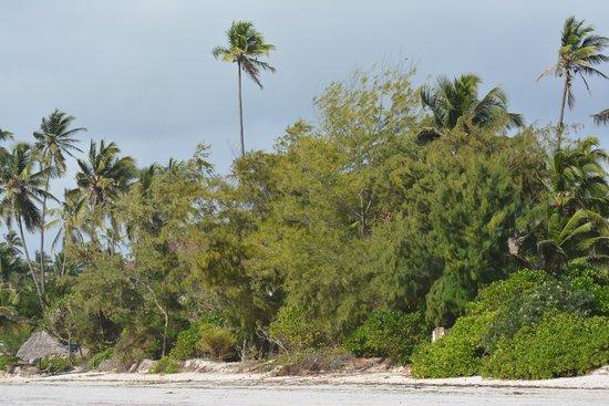 Twisted Palms Lodge & Restaurant : Lungo la spiaggia