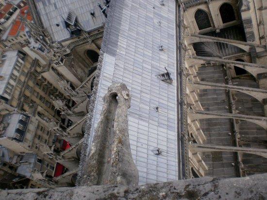 Tours de la Cathedrale Notre-Dame : Vistas Cubierta Nave y Detalle Gárgola