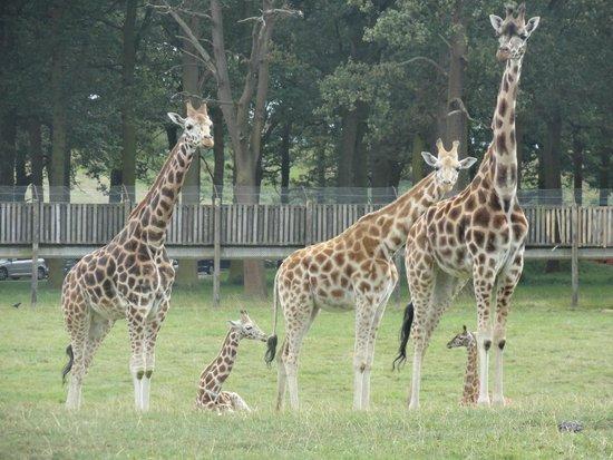 Woburn Safari Park: woburn safari