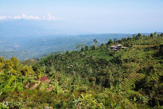 Munduk Moding Plantation : 15 minute walk from the hotel