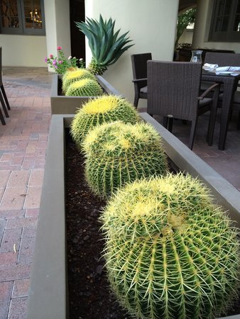 Fairmont Scottsdale Princess: Landscape