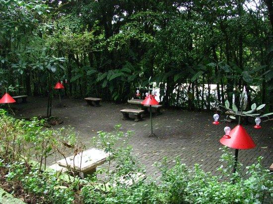 Parque Selvatura: el espacio es esto y poco más..pero suficiente para disfrutar de los colibríes