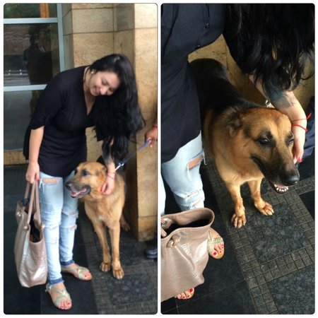 Grand Hyatt Mumbai: dogs at the entrabce