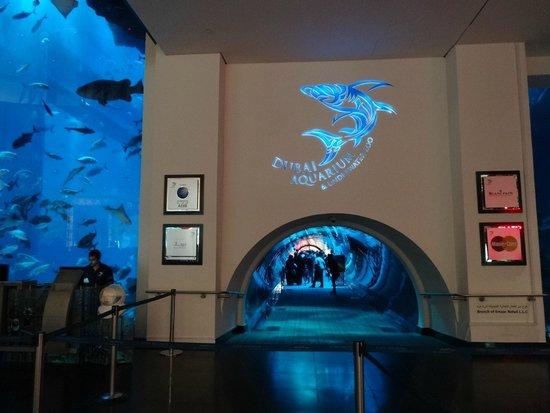 Dubai Aquarium & Underwater Zoo: Аквариум в Дубай Молле