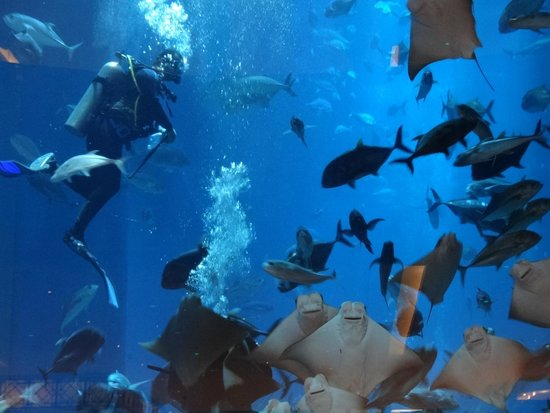 Dubai Aquarium & Underwater Zoo: АКВАРИУМ ДУБАЙ МОЛЛ