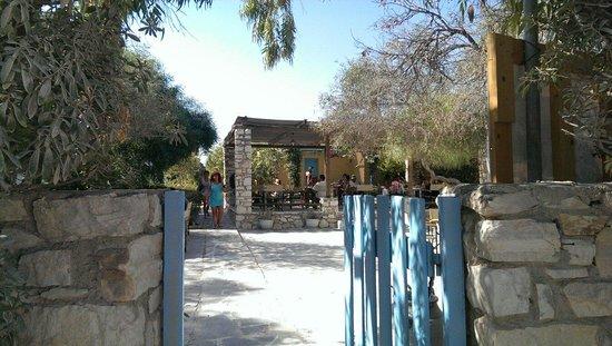 Surfing Beach Village: Ingresso zona bungalow e area colazione