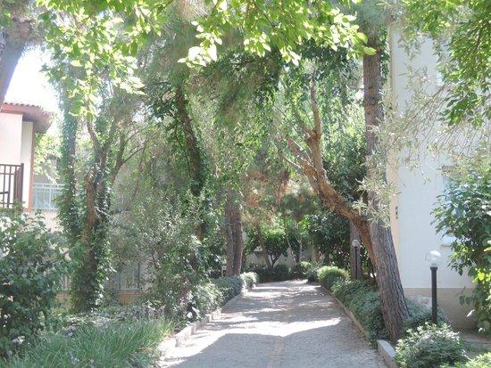 Teos Village: Foliage