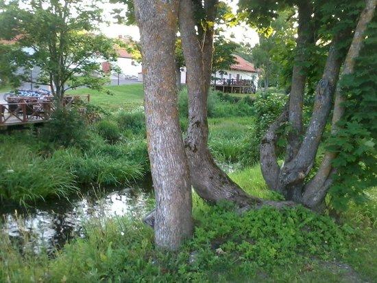 Vihula Manor Country Club & Spa: El bosque rodea el hotel