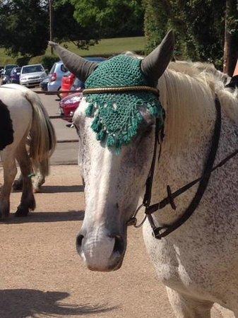 Arniss Equestrian: Harold