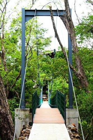 Rio Perdido : Suspension Bridge