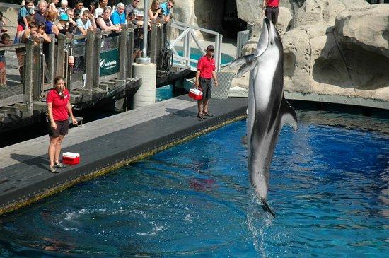 Vancouver Aquarium: Vancouver Acquarium, dolphin show