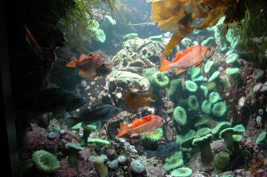 Vancouver Aquarium: Vancouver Acquarium