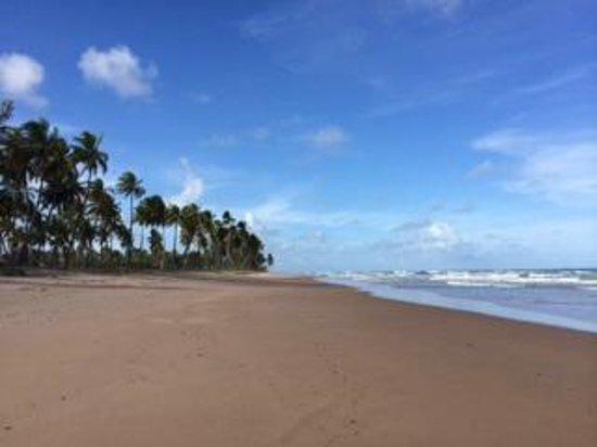 Bahia Surf Camp : Beach